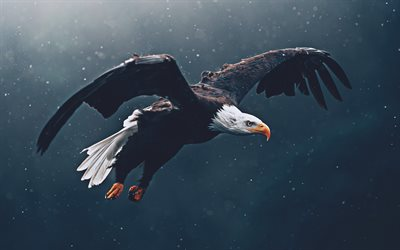 Flying Bald Eagle, 4k, wildlife, USA symbol, bokeh, birds of North America, Bald Eagle, Haliaeetus leucocephalus, Bald Eagle 4K, eagle