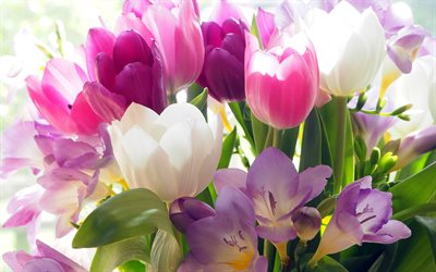 bouquet of tulips, spring flowers, white tulips, pink tulips, background with tulips, beautiful flowers
