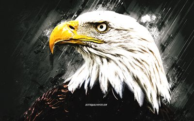 Bald eagle, grunge art, gray stone background, bird of prey, North America, USA symbol, eagles
