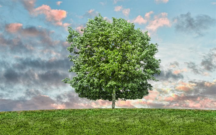 green tree, blue sky, eco concepts, beautiful tree, environment, summer
