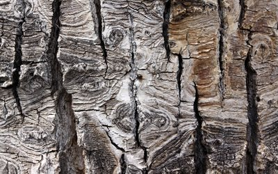 old tree bark texture, wood bark, gray wooden background, forest, natural textures