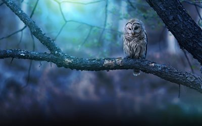 Owl, night, wildlife, predatory bird, Strigiformes