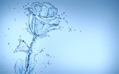 rose of water, water splashes, water rose, blue background, flower of water, creative