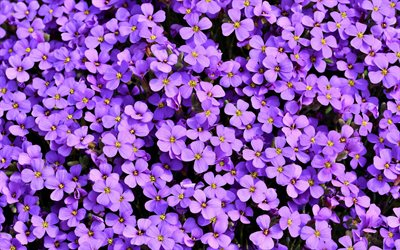 background with purple flowers, purple flower texture, purple floral background, beautiful purple flowers
