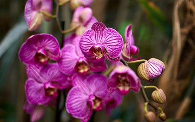orchid, rainforest, pink orchid, orchid branch, background with orchids