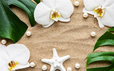 white orchids, sand, summer travel, sand background, beautiful white flowers