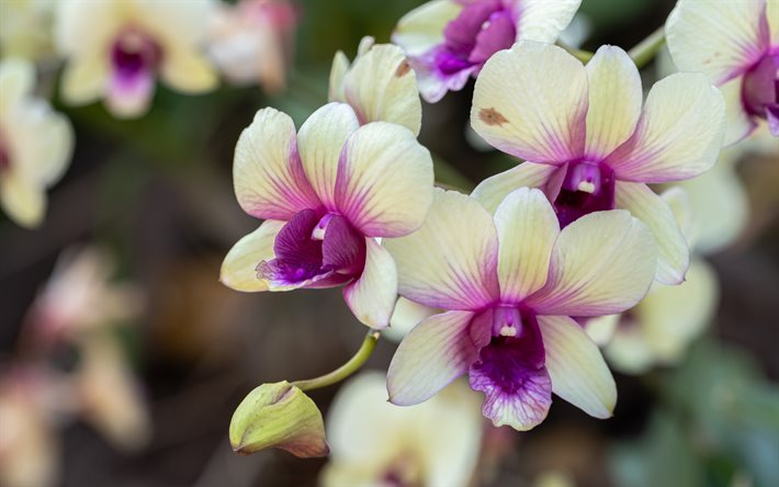 yellow orchids, tropical flowers, orchid branch, background with orchids, beautiful flowers, orchids