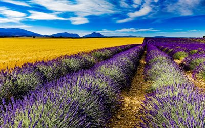 France, lavender, field, summer, Valensole, HDR, Europe