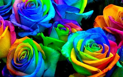 colorful roses bouquet, macro, colorful backgrounds, bouquet of roses, bokeh, colorful flowers, roses, buds, colorful roses, beautiful flowers, backgrounds with flowers