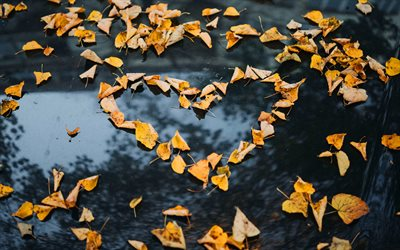 Heart of yellow leaves, love concepts, I love autumn, yellow leaves, creative heart