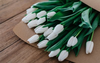 white tulips, bouquet of tulips, white spring flowers, tulips, background with tulips, white beautiful flowers
