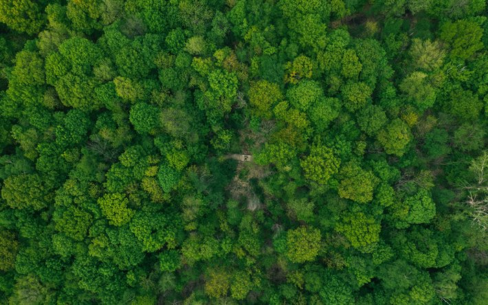 forest top view, green trees, loneliness concepts, ecology, environment concepts, forest view from above, forest