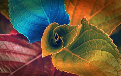 colorful leaves, colorful flower, leaves texture, floral texture
