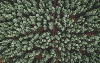 green forest, aerial view, spruce forest, view from above, road in the forest