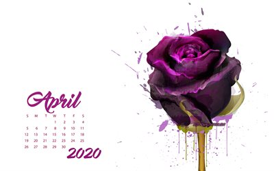 2020 Calendrier avril, marron grunge rose, avril 2020 printemps calendriers, 2020 concepts, des roses, avril 2020 Calendrier