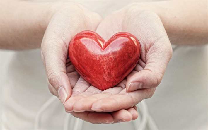 red heart in hands, love concepts, red heart, female hands, take care of your health, health insurance, cardiology