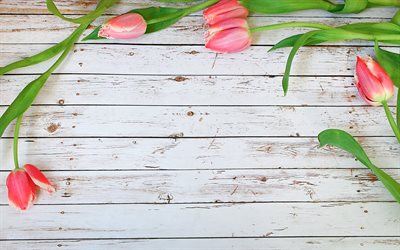 pink tulips frame, floral concepts, floral frames, wooden backgrounds, pink tulips