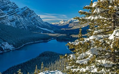 Peyto Lake, mountain lake, forest, winter, mountain landscape, Banff National Park, Alberta, Canadian Rockie, Canada
