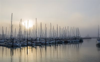 yachts, bay, sailboats, morning, sunrise, fog, beautiful white yachts, parking for yachts