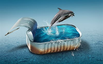 dolphins, pool, sea, water, creative