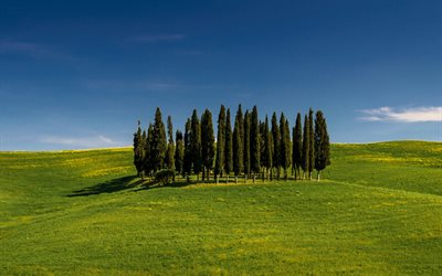 Tuscany, trees on a hill, green grass, green meadow, morning, sunrise, Italy