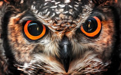 owl, beautiful bird, big eyes, birds, owl eyes