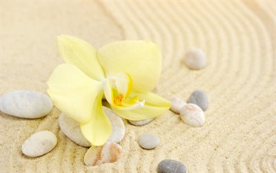 yellow orchid, yellow leaf, sand, spa, stones, seashells