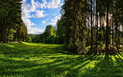 Augsburg, 4k, summer, forest, HDR, beautiful nature, Germany, Europe