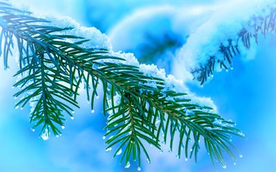 Christmas tree branch, 4k, winter, christmas backgrounds, green fir-tree, blue winter backgrounds, nowy tree branch