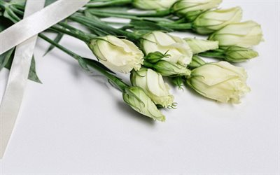 white eustoma, macro, bokeh, bouquet of eustoma, white flowers, eustoma, beautiful flowers