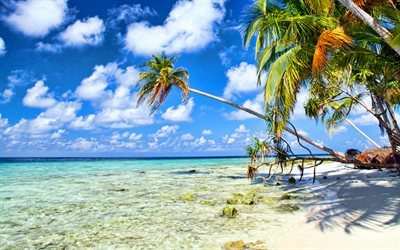 tropical island, summer, palm trees, ocean, summer travel, palm tree over the sea