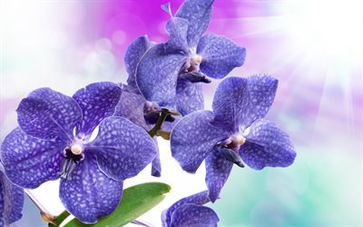 Purple orchids, tropical flowers, branch of orchid, orchids