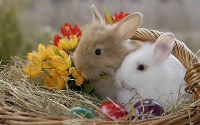 Easter, rabbits, cute animals, spring, Easter eggs