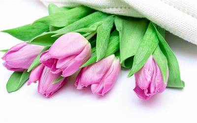 Pink tulips, spring flowers, tulips on a white background, floral background, tulips, spring