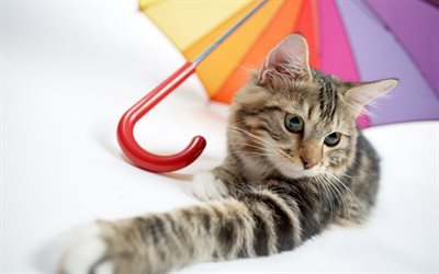 Cat, umbrella, cute animals, pets, cats