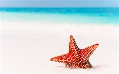 red starfish, beach, sea, sand, summer travel, starfish in the sand