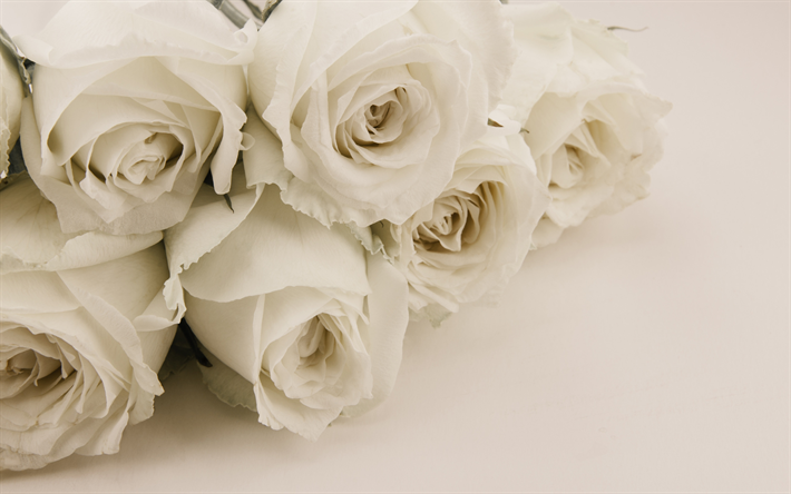 Download wallpapers white roses bouquet of white flowers roses white roses bouquet of white flowers roses floral background white flowers mightylinksfo