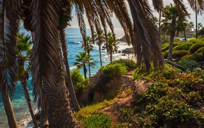 Laguna Beach, ocean, palms, coast, California, USA, America