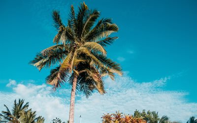 palms, blue sky, tropical island, coconuts, palm leaves, clouds