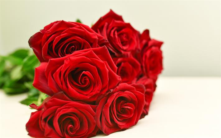 تحميل خلفيات الورود الحمراء جميلة الزهور الحمراء باقة من الورود