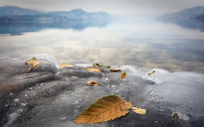ice, leaves, lake, frozen lake