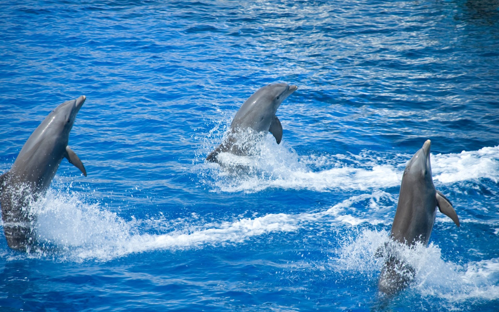 Dolphins, water, dolphinarium, swimming pool