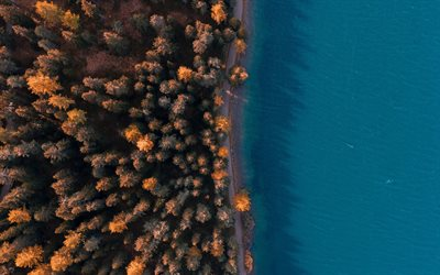 forest aerial view, coast view from above, forest, coast, trees, autumn