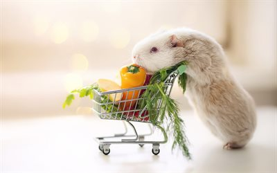 Guinea Pig, funny animals, creative, shopping cart, bokeh, Guinea Pig in market