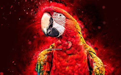 Scarlet macaw, 4k, red neon lights, red parrot, Ara macao, creative, parrots, Ara