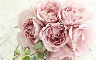 pink roses, bouquet, close-up