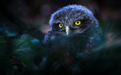 owl, twilight, forest, wildlife, birds