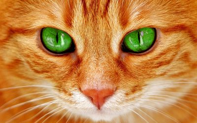 red cat, green cats eyes, pets, cats