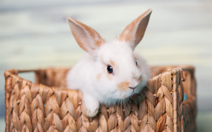Download wallpapers white rabbit, close-up, basket, cute ...