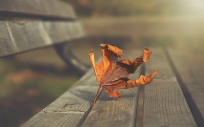 dry maple leaf, yellow leaf, autumn, wooden bench